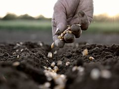 SL Life Lessons: Measure Your Productivity by How Much Seed You Sow
